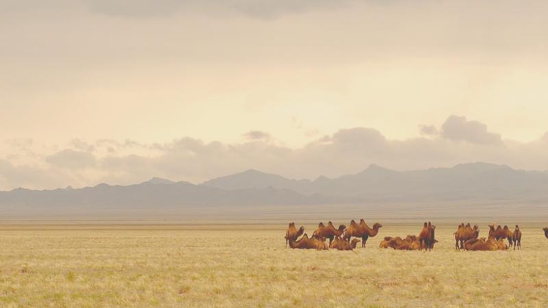 La banque centrale de Mongolie a lancé de nouveaux billets améliorés au niveau sécurité